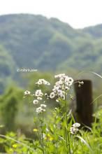 20120519_074.jpg