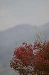20061127momizi1.jpg