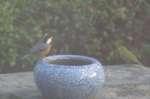 20061204yatyou.jpg