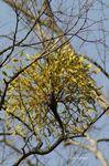 20070105yadorigi.jpg