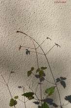 20081207_8065.jpg