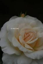 20110510_070.jpg
