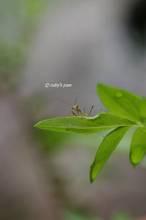 20110606_013.jpg