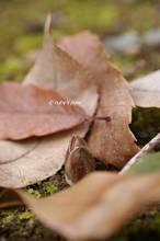 20120125_035.jpg