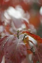 20121027_039.jpg